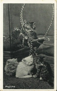 Vintage photograph of kittens1908