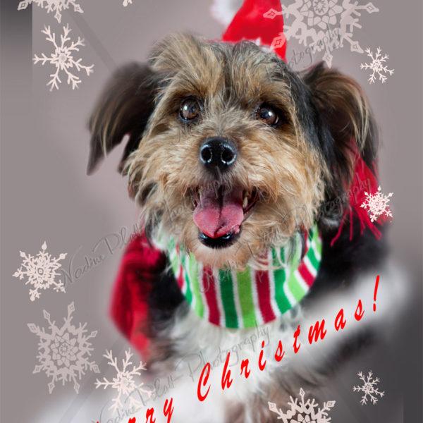 Christmas Greeting Card with a Dog by Nadine Platt